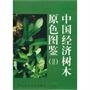 中国经济树木原色图鉴(Ⅱ)