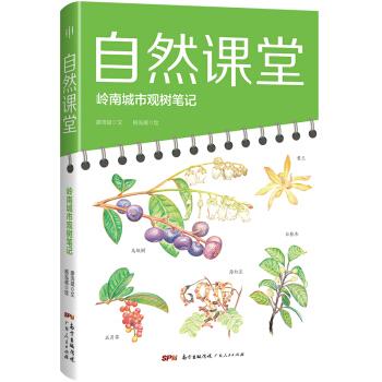 自然课堂:岭南城市观树笔记