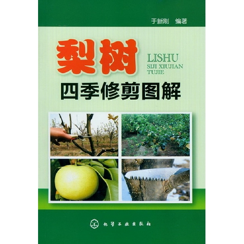 梨树四季修剪图解-百道网