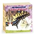 彩绘法布尔昆虫记——熊田千佳慕的世界(全5册)