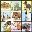 动物亲情故事摄影绘本